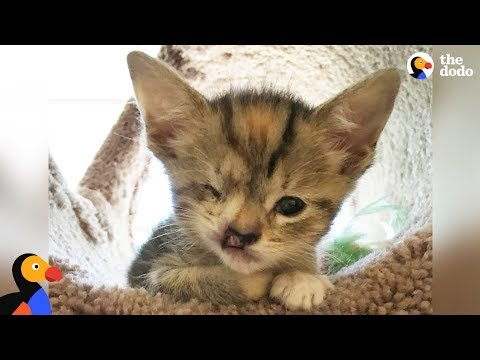 Kitten Born Too Small Gets Extra Love From Mom | The Dodo