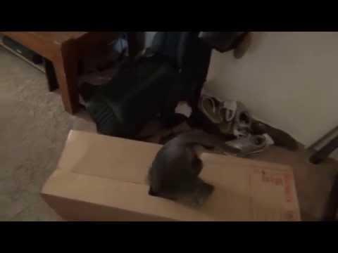 Cat Fail- Kitty falls in box flap