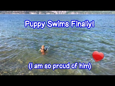 Puppy Swims Finally! - Just Gin 3: Cutest Dog Ever! VOL. 47