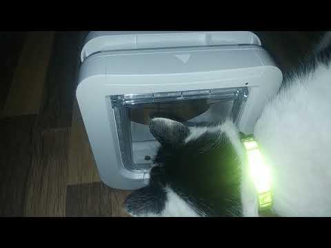Elly und die SureFlap Katzenklappe - 1.Tag langsames Angewöhnen
