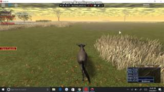 Roblox-Wild Savannah-Gnu fights for his life again'st lions and buffs
