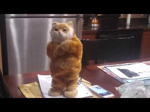 Amazing dancing cat speaker