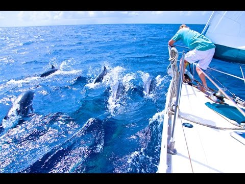 Sailing with a pod of DOLPHINS, in the CARIBBEAN SEA between DOMINICA and ST LUCIA!