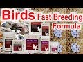 Soft Food For All Birds In Breeding Season | Top Breeding Tips Urdu/Hindi