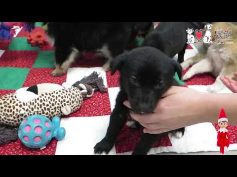 These adorable puppies need your help this holiday season!