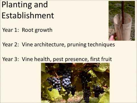NDSU Spring Fever Garden Forum - Harlene Hatterman-Valenti (Grape Growing for Gardeners)