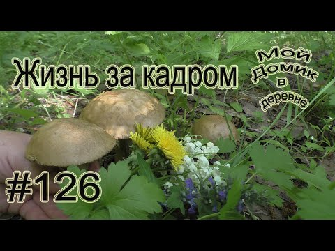 #126 Жизнь за кадром! Первые грибы!