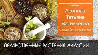 Лекарственные растения Хакасии