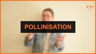 Environnement - Pollinisation