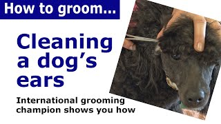 How to Clean a Dog's Ears - expert dog grooming demonstration
