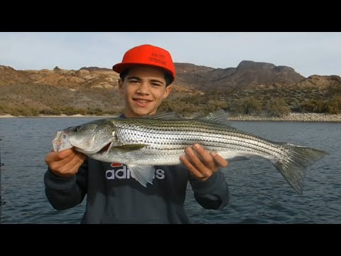 Striped Bass Fishing: Trolling For Stripers At Willow Beach, AZ