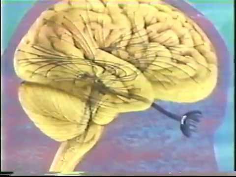 Understanding Human Behavior (1981)