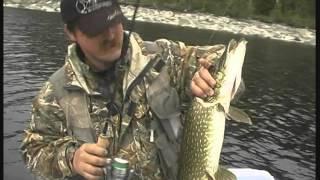 ловля горбача серебряный ручей с юрием заславским видео