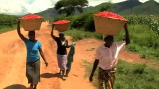Zimbabwe's Sweet Pepper is Feeding Markets in The USA