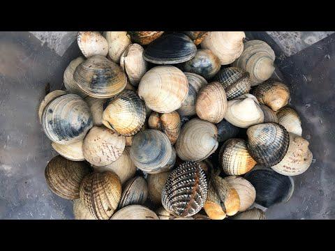 Coastal Foraging - Clams, Cockles, Shellfish, Lugworm, Ragworm And Sandeels