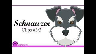 Schnauzer 3/3 Pink Poodle