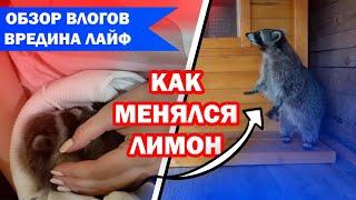 ВРЕДИНА ЛАЙФ | ОБЗОР ВЛОГОВ