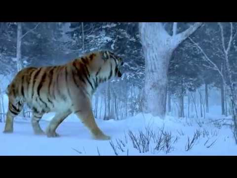 the taking of tiger mountain movie download in hindi 480p
