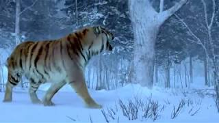 The Taking Of Tiger Mountain-The Best Tiger Scene