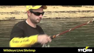 Wildeye Live Shrimp