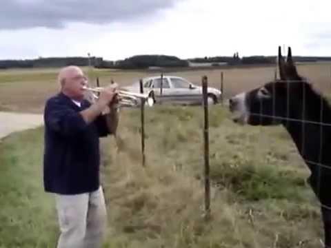 L'homme et l'âne... - NATURAIMER