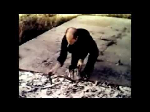 Jackson Pollock - Paintings have a life of their own