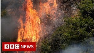 Lebanon battles worst wildfires in decades - BBC News