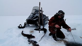 Налим на перемёт(Шок для диванных рыбаков)(Рыбалка на Севере,шок для диванных рыбаков. Сейчас подорвутся гринписии..., 2015-12-28T14:45:59.000Z)