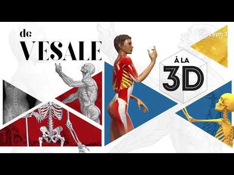 """Exposition """"L'anatomie, de Vésale à la 3d"""""""