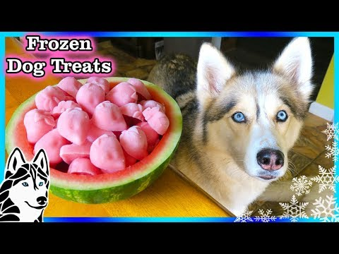 STRAWBERRY WATERMELON DOG TREAT | How to make Frozen DIY Dog Treats  | Snacks with the Snow Dogs 82