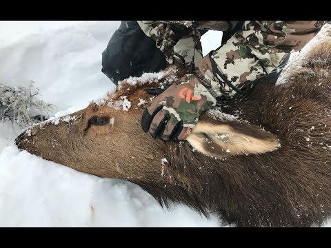ELK HUNTING | MY FRIENDS UNFORGETTABLE FIRST BIG GAME HUNT!