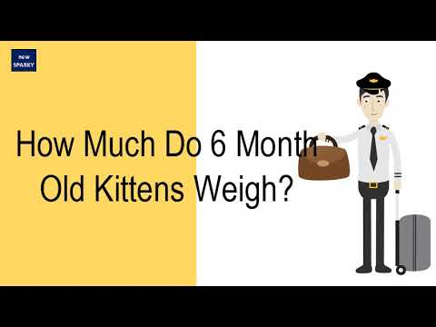 how-much-do-6-month-old-kittens-weigh?