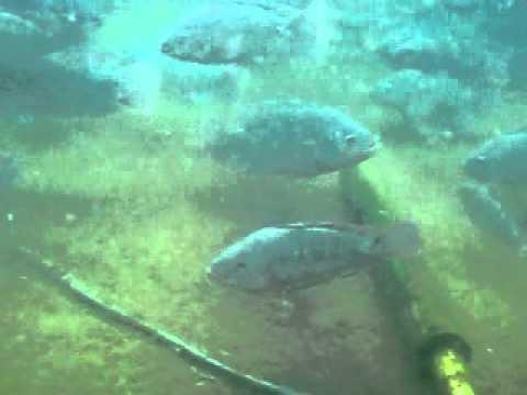 Tanques de geomembrana para tilapia tangeomex youtube for Geomembrana para estanques de agua