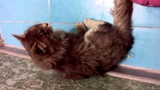 Патологичное дыхание кошки