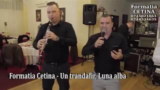 Formatia Cetina - Un trandafir, Luna alba 2019