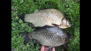 КАРАСЬ ПОПЁР в КАХОВСКОМ водохранилище лапти как сварочная перчатка Рыбалка в селе МАЛАМИНА