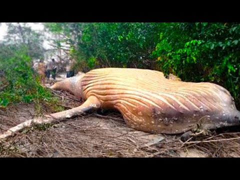 15 TERRIFYING Things Found In The Amazon!