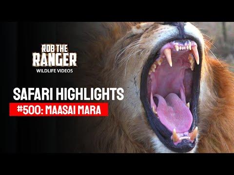 Safari Highlights #500: 30th September 2018 (Latest Sightings) (4K Video)