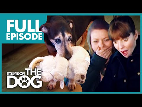 The FourLegged Baby: Buster | Full Episode | It's Me or the Dog