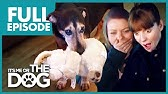 The Four-Legged Baby: BusterFull EpisodesIt&#39s Me or the Dog