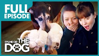 The Four-Legged Baby: Buster | Full Episode | It's Me or the Dog