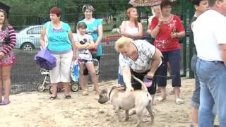 В Харькове сделали дрессировочную площадку для собак