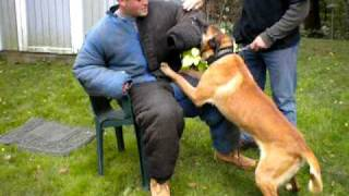 Trouwe Hond K-9 - Dog Training Specialist