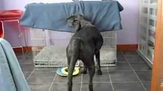 Собака сама себя закутала в одеяло