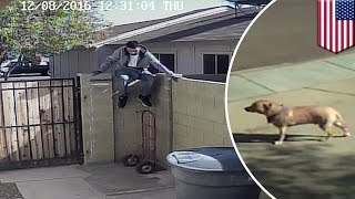 Guard dog fail: video shows burglars lure unsuspecting pooch out of house using treats - TomoNews