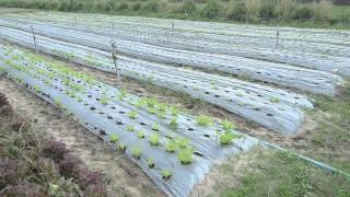 Visiting Adams Organic Farm in Thailand