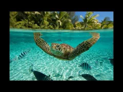 Polinesia francés hermosos paisajes - Hoteles alojamiento Vela
