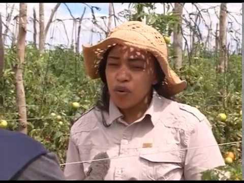YOUNG PEOPLE IN AGRICULTURE - ZAMBIA
