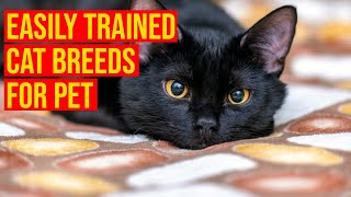 10 Easily Trained Hypoallergenic Cat Breeds For Pet/ All Cats