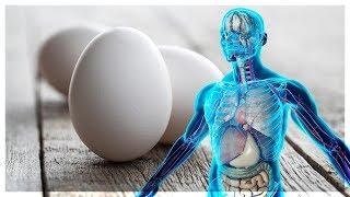 ماذا لو أكلت ثلاث بيضات كل يوم !! لن تصدق ماذا سيحدث لجسمك
